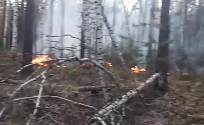 Сезон летних пожаров начался: в лесах под Екатеринбургом за день сгорели 5 гектаров травы