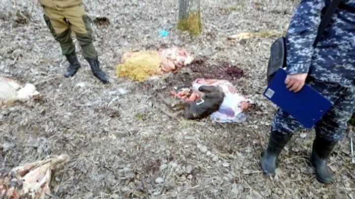 Дело об убийстве беременной лосихи под Тюменью предложили закрыть. Судья — против