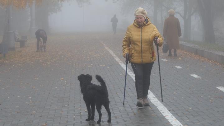 Вместо снега — дожди и туманы: на Волгоградскую область надвигается оттепель