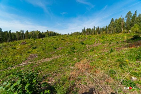 На этом участке уже вырубили пять гектаров леса и собираются добывать песчано-гравийную смесь