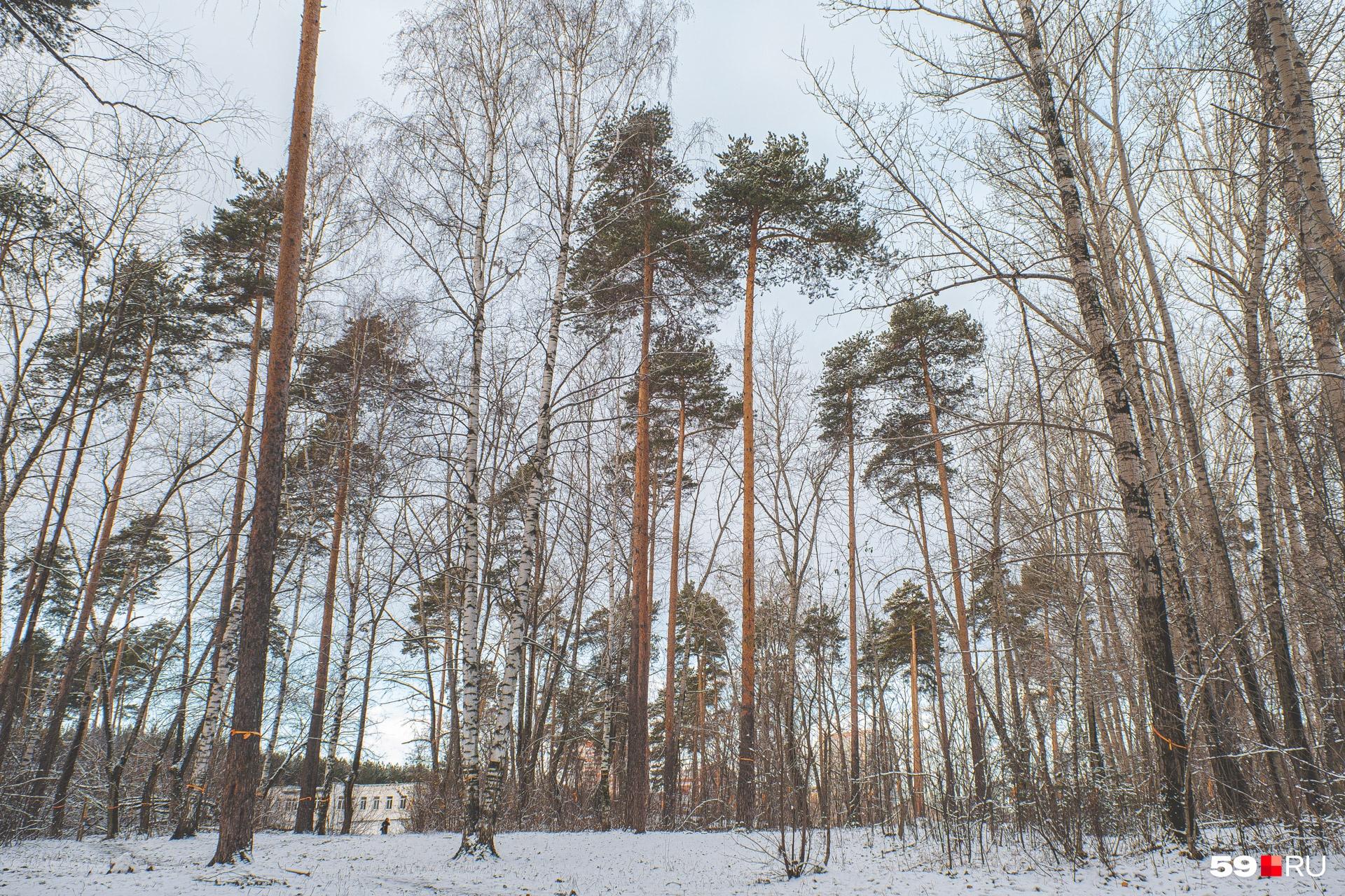 Многие жители микрорайона гуляют и занимаются спортом в этом лесу