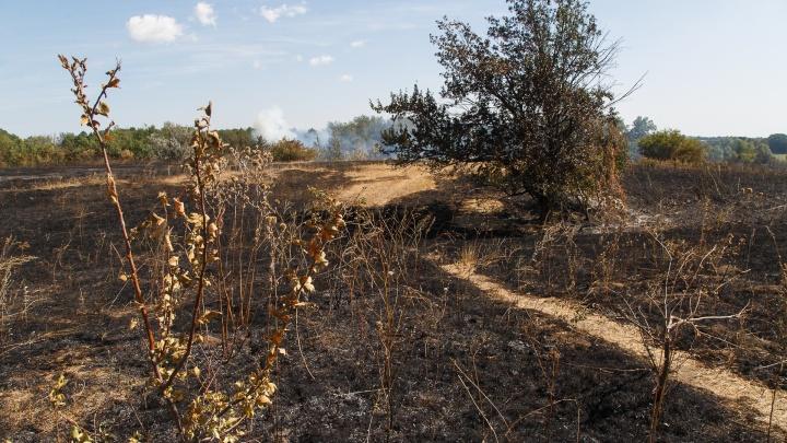 Срочно эвакуируют людей: крупный пожар в Михайловском районе может уничтожить целый хутор