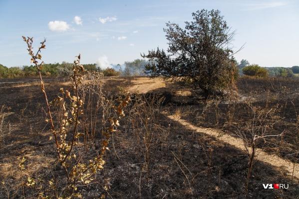 Огонь идет на хутор со стороны поля