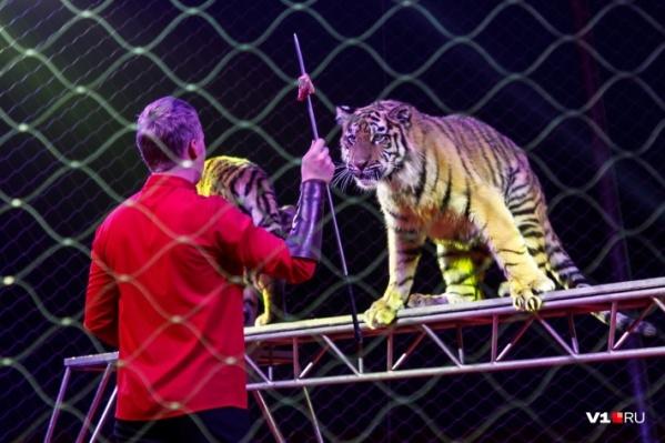 Артисты цирка очень надеются, что послабления коснутся и их