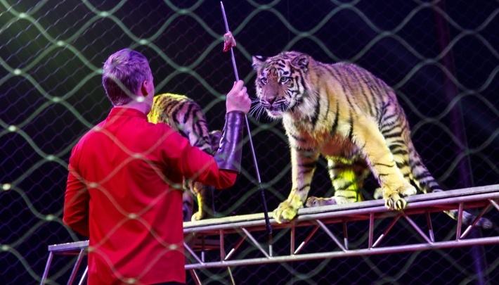 «Уже перестирали всё. И даже тапочки»: артисты застрявшего в Волгограде цирка Довгалюк ждут снятия ограничений