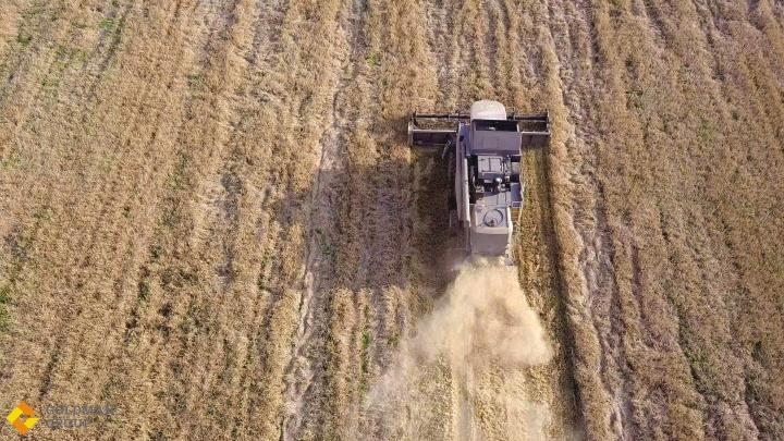Уборочная-2020: аграрии Goldman Group снова вышли в лидеры