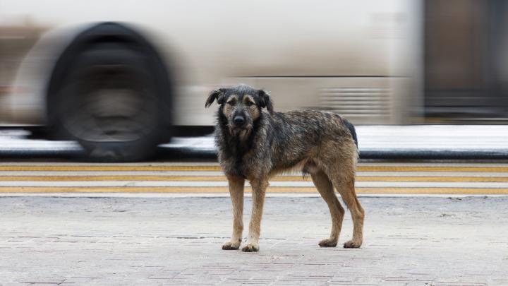 Стой, кричи, сбрасывай вещи: как волгоградцам уцелеть в схватке с бездомными собаками — 8 главных правил