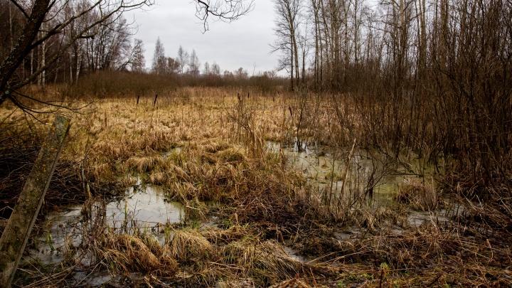 В Ярославле суд вынес приговор женщинам, похитившим и задушившим в лесу подругу
