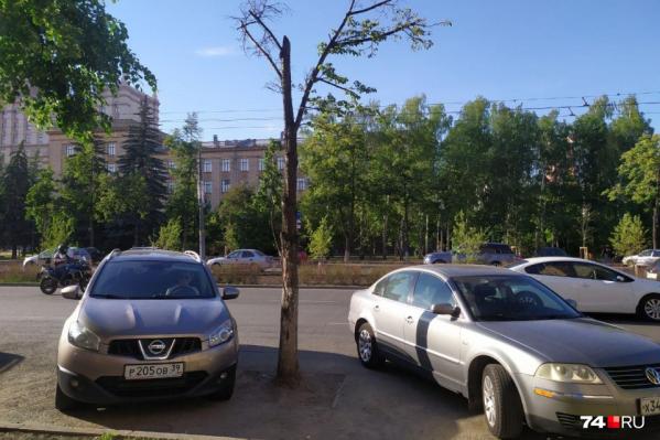 Сейчас на бульваре обновляют деревья, следующий шаг — открытие кафе