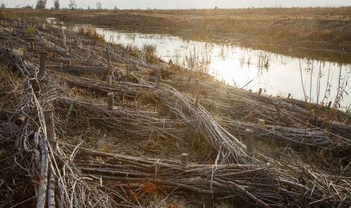 В Волгоградской области приговорили к расстрелу трех бобров и трех волков