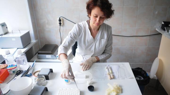 В Екатеринбурге клещей будут проверять и в праздничные выходные из-за большого числа пострадавших