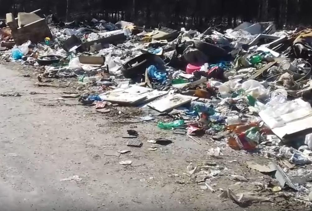 «Чтобы усилить карательные меры за бездействие»: житель Онеги показал придорожную свалку — видео