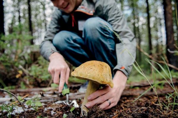 Ищите грибы для фотосессий в тюменских лесах
