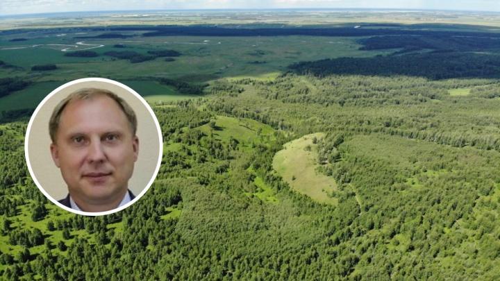 Глава лесного комплекса, пообещавший восстановить криводановский лес, ушел в отставку
