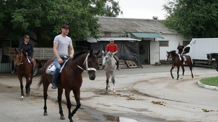 Протест на коне: коневладельцы добились возобновления скачек на ипподроме Ростова