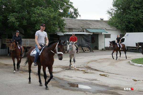 В марше участвовало более десяти лошадей