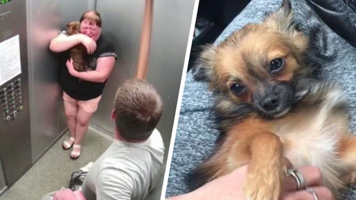 «Трусы так самоутверждаются»: ветеринары нашли множество травм у избитой на Латвийской собаки