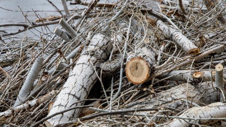Хотел сделать забор: волгоградцу грозит два года колонии за 30 срубленных деревьев