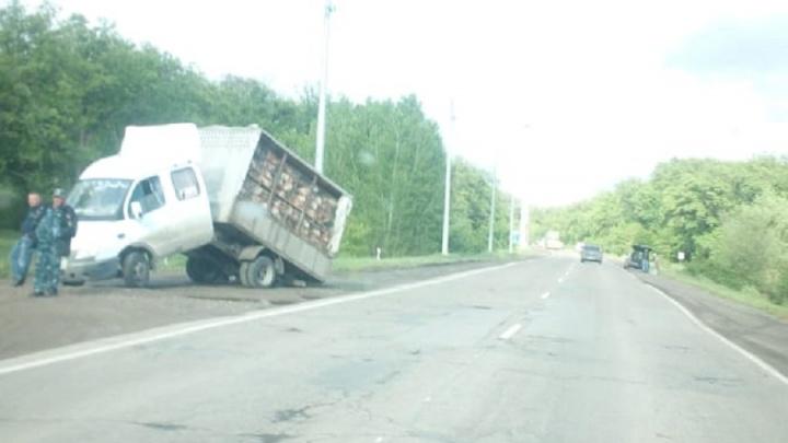 На трассе в Среднеахтубинском районе переломилась «Газель» с курами