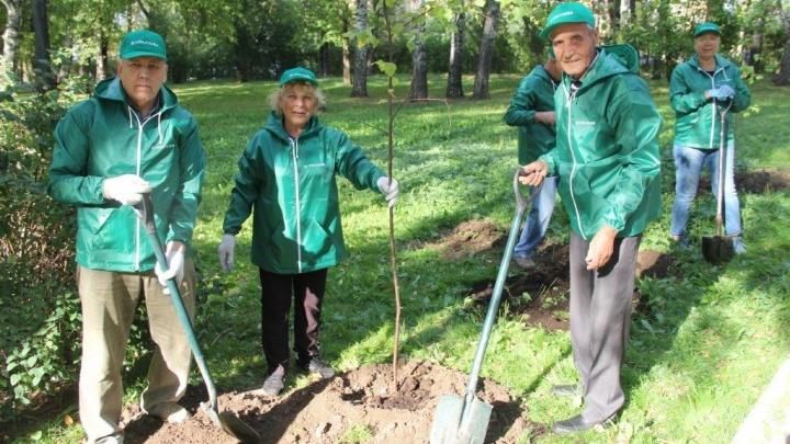 В Перми появилась «Аллея ветеранов» — деревья для нее высадили сотрудники «УРАЛХИМа»