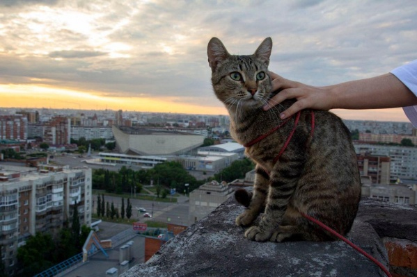 В дороге уральцы встретили милого котика