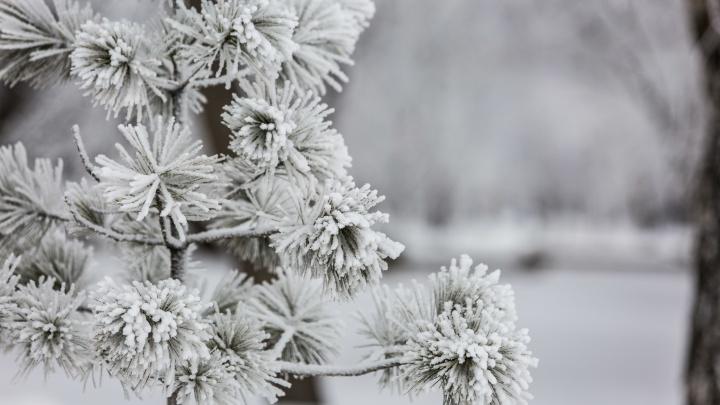 Застывший город. 10 снимков последних дней зимы в Новосибирске — скоро всё это исчезнет