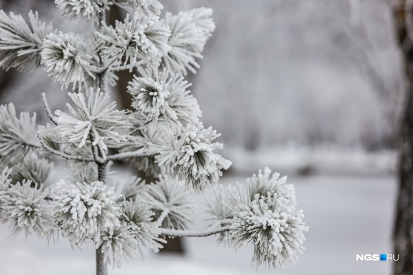 Деревья в Новосибирске побелели с утра