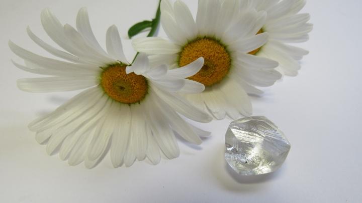 На Ломоносовском месторождении в Архангельской области добыли крупный алмаз. Фото