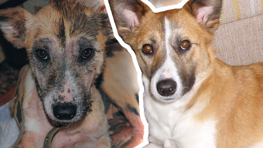 10 добрых историй, от которых хочется плакать: как изменились бездомные животные, обретя семью