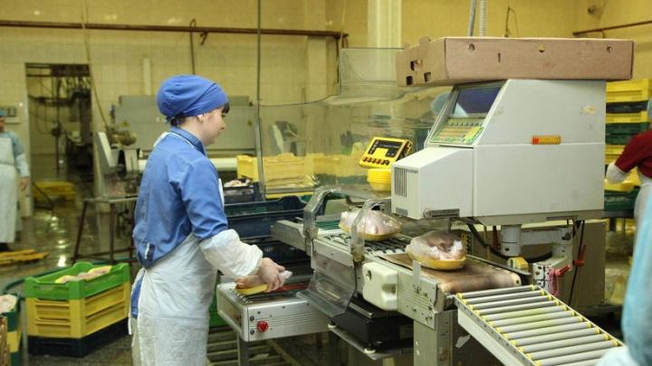 «Собственник приобрел уже с убытками»: почему закрылась птицефабрика в Уйме
