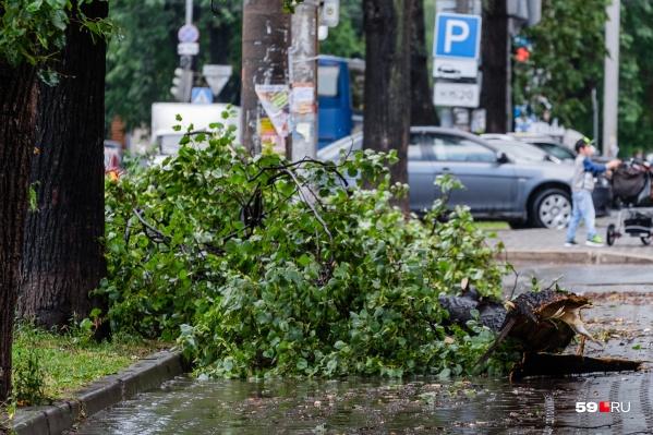 МЧС рекомендует не ходить под деревьями. Из-за сильного ветра они могут сломаться