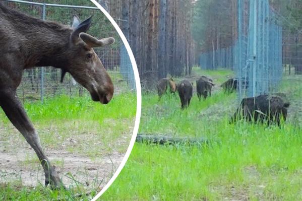 С помощью фотоловушек за животными могут наблюдать круглые сутки