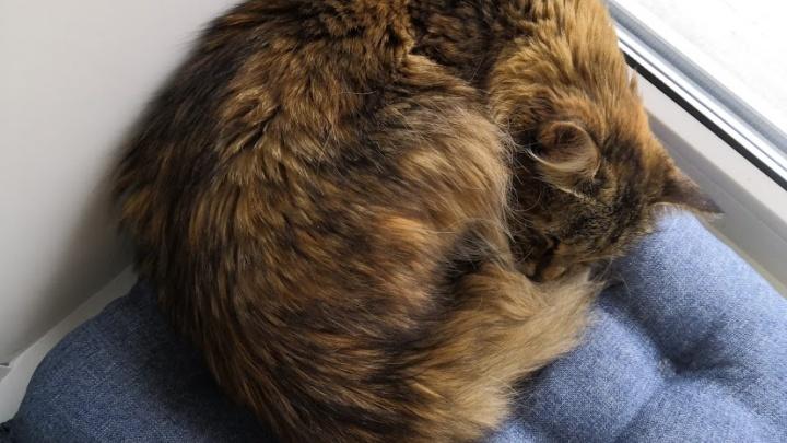 Пьяный красноярец выбросил в мусоропровод соседскую кошку