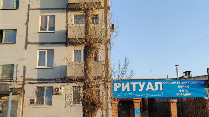 «За это чиновника не посадят»: радикальная обрезка деревьев «под пень» дошла до Волжского