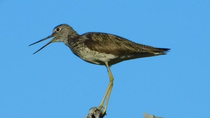Большой улит, варакушка и гоголенок: смотрим на птиц в нацпарках Поморья — фоторепортаж