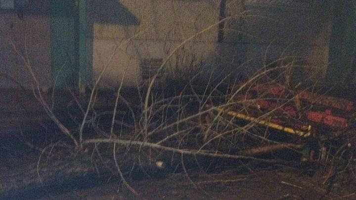 «Оттащить не смог»: в Волгограде упавшее дерево перегородило вход в подъезд пятиэтажки