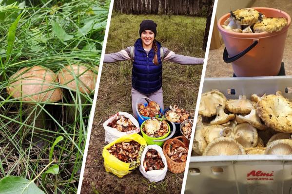 Когда в лесу наконец пошли грибы, сложно оставаться дома
