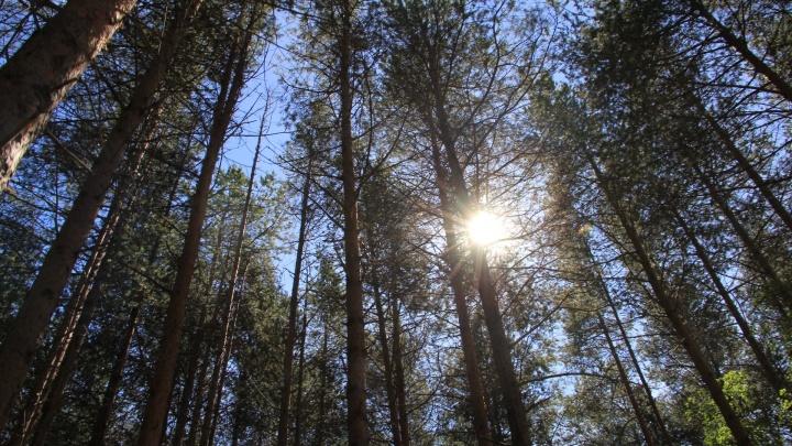 Экологи отправились в леса Архангельской области, претендующие на статус Национального наследия