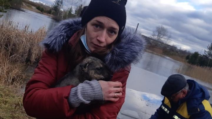 «Люди — звери»: в Алапаевске поисковики спасли щенков, которых в мешке выбросили умирать на тонкий лед