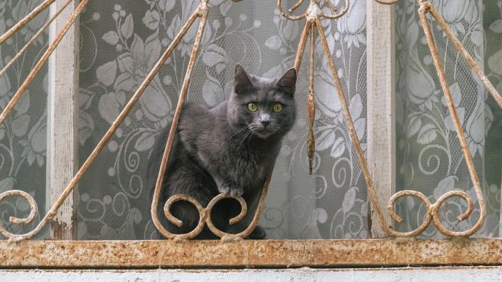 Черные коты не пугают: Самара оказалась в конце топа суеверных городов