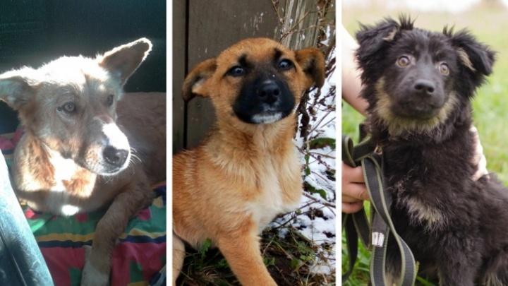 Морила собак голодом: суд прекратил уголовное дело переславской живодерки