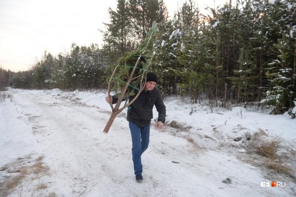 Самая маленькая елка обойдется всего в 57 рублей 7 копеек