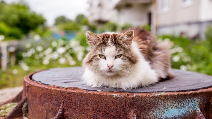 Измерили в котиках: Ярославская область попала на первое место в России по поврежденным теплотрассам