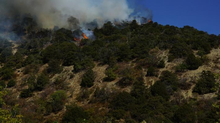 Языки пламени вырывались на несколько метров вверх