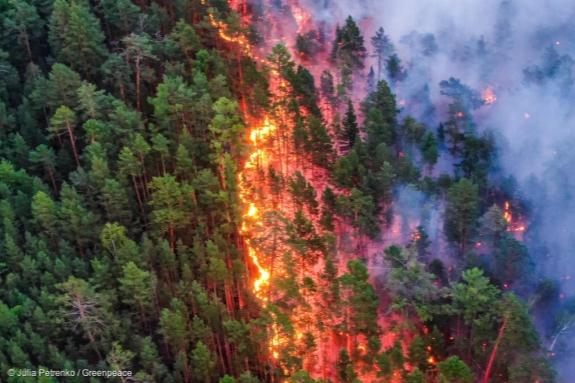 По данным краевых властей, обстановка в крае с лесными пожарами нормализовалась