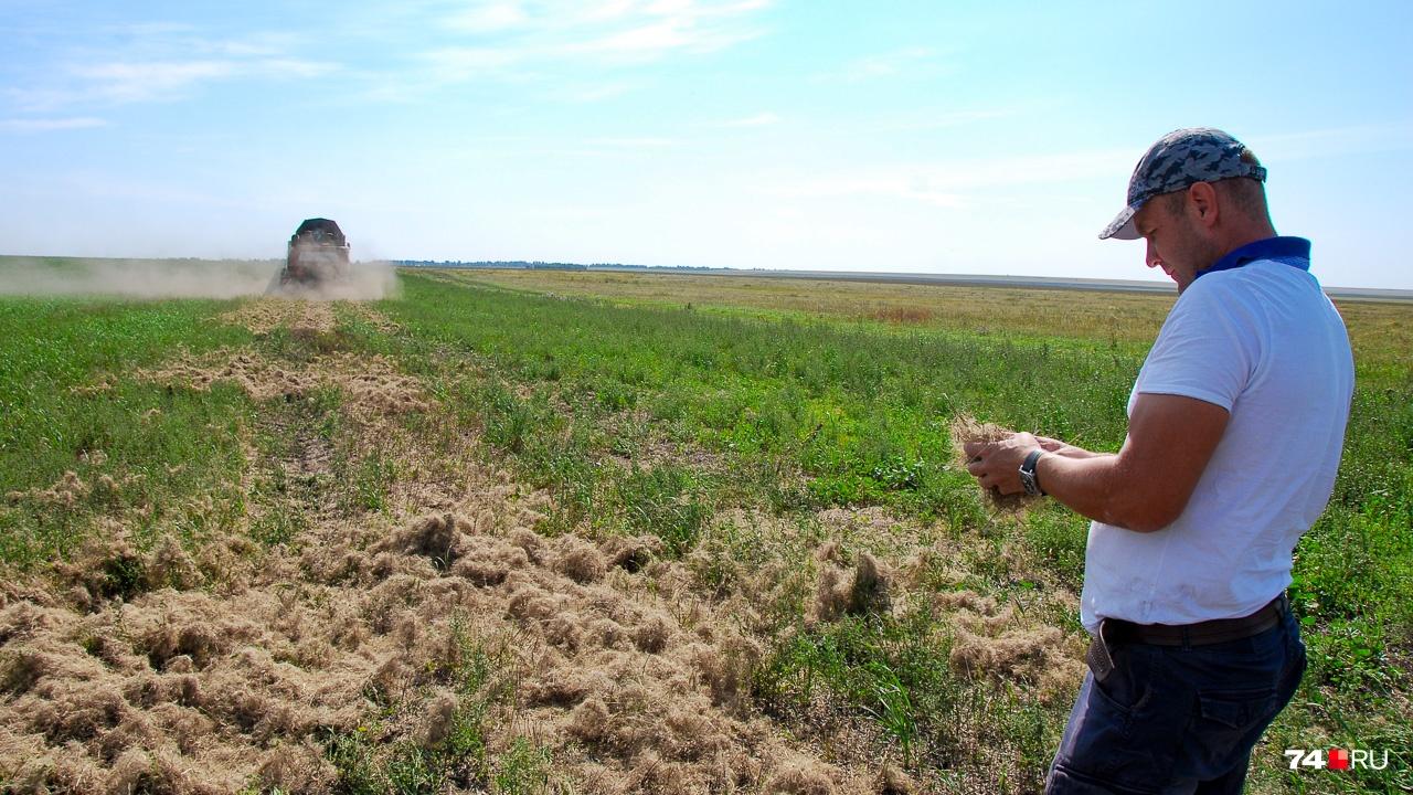 На льняном поле позади комбайна остаётся та самая пакля, которой уплотняют зазоры между брёвнами деревенских домов
