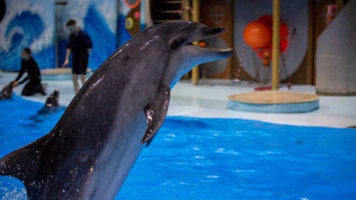 «Если бы вы сидели 25 лет в ванной, то не превратились бы в психа?» Сибирячка вступила в спор с вице-мэром о дельфинариях