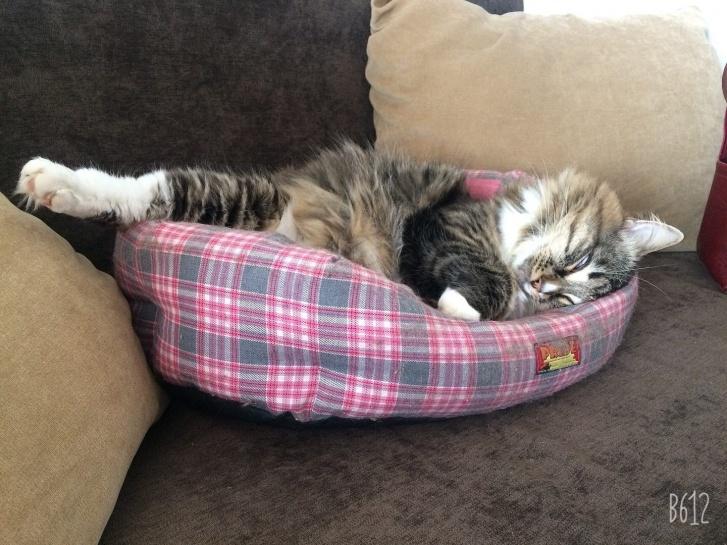 «Ладно, можешь потискать мне пушистый бочок, пока я вздремну»