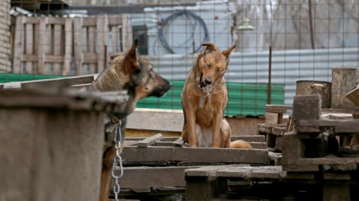 «Шла с ребенком и не знала, чего ожидать»: в Уфе бродячих собак заметили возле школы