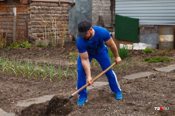 В Сибири зона рискованного земледелия. Это значит, что гарантий урожайности нет. Тем не менее тюменцы очень любят дачи и всегда сажают огурцы, помидоры, ягоды и картошку. Свое, как говорится, вкуснее